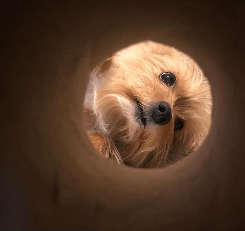 moon selfie - Dog