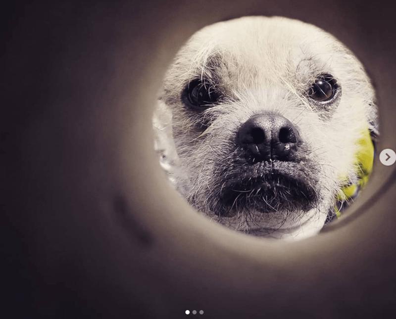 moon selfie - Snout