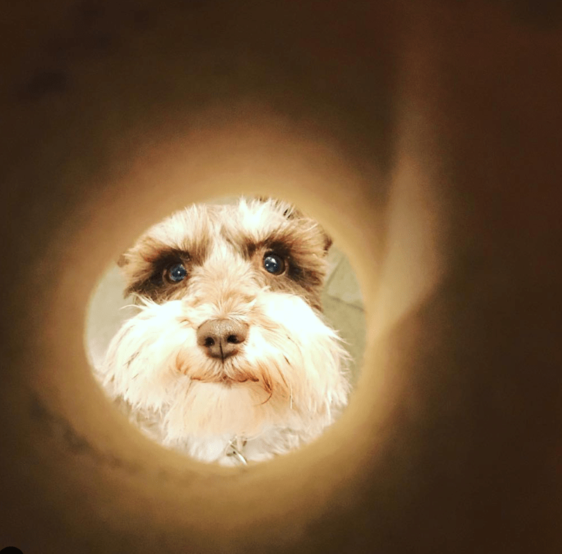 moon selfie - Dog