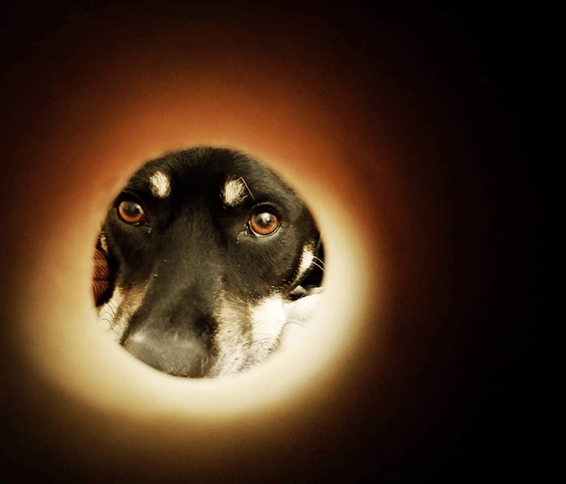moon selfie - Dog breed