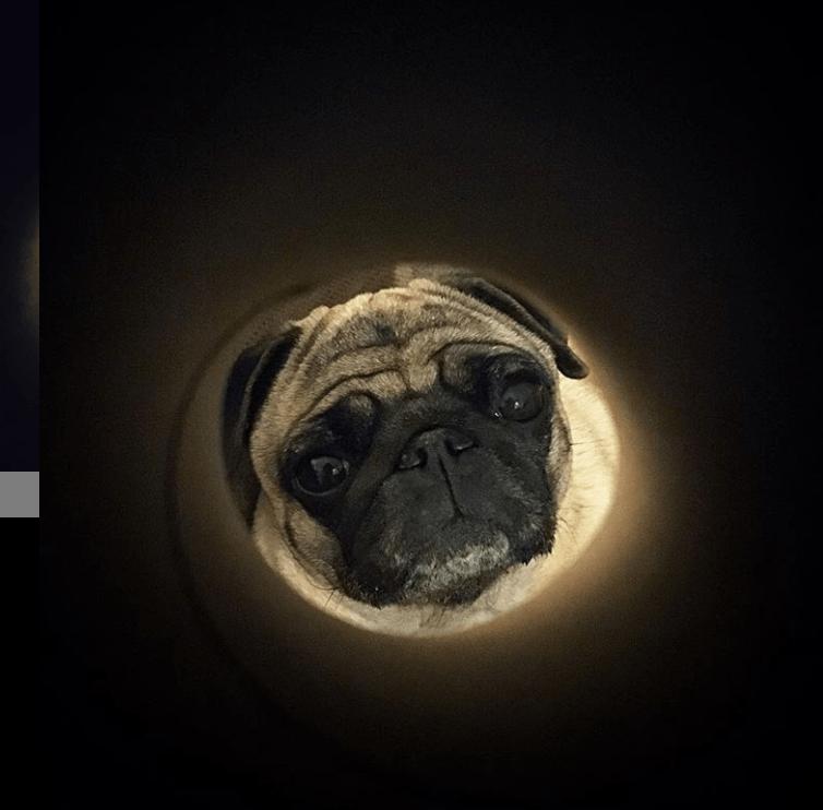 moon selfie - Pug