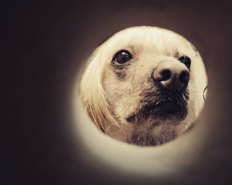 moon selfie - Mammal