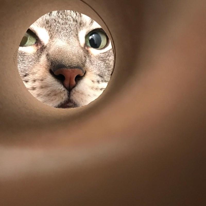 moon selfie - Cat
