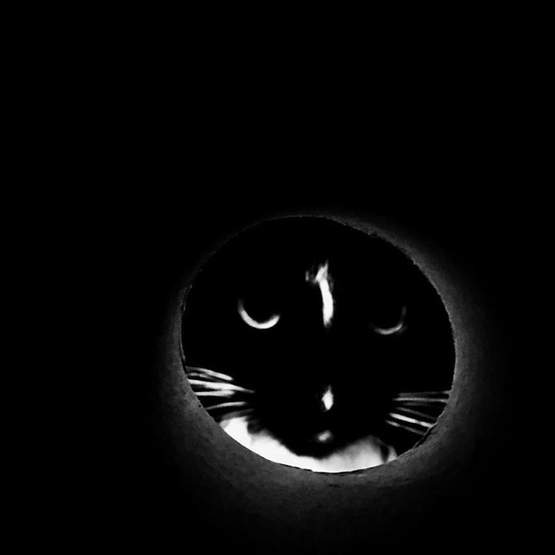 moon selfie - Black