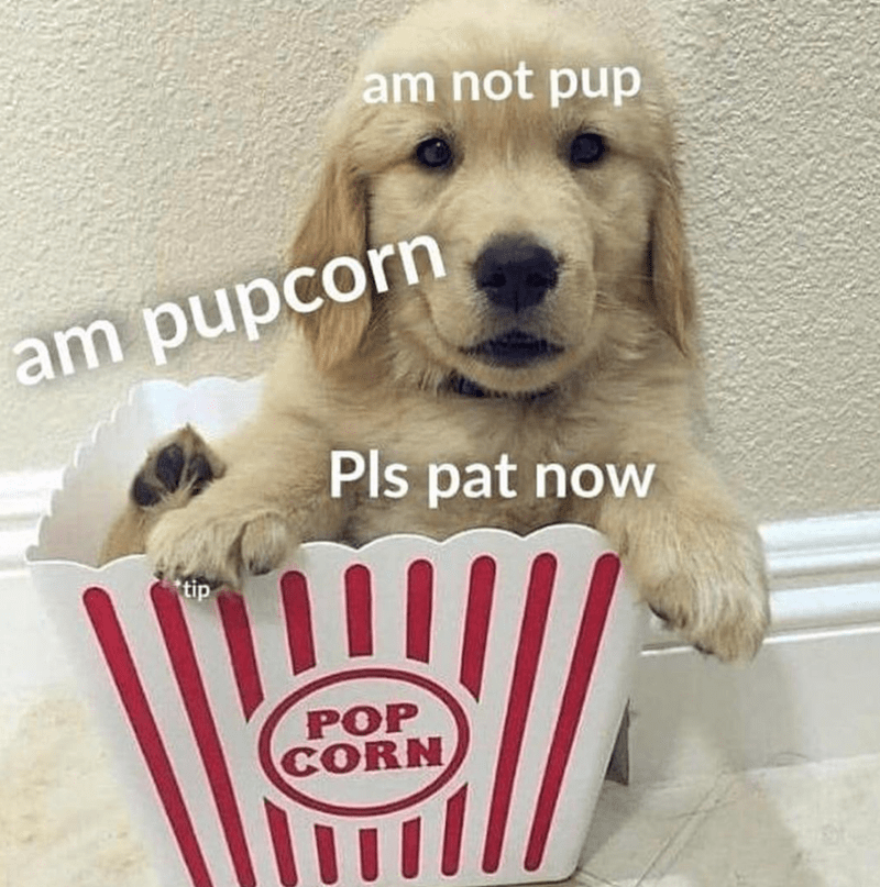 national popcorn day cute pupcorn - 9260473344