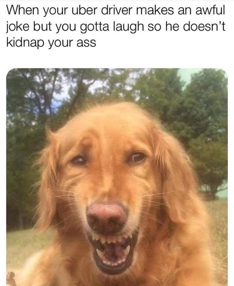 Dog - When your uber driver makes an awful joke but you gotta laugh so he doesn't kidnap your ass
