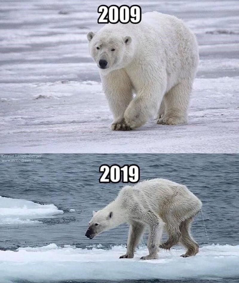 Polar bear - 2009 Kerstin Langenberger www.itetfedreas.com 2019