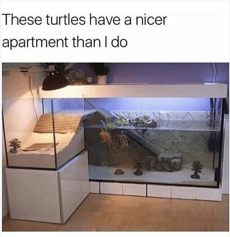 Turtle - These turtles have a nicer apartment than I do