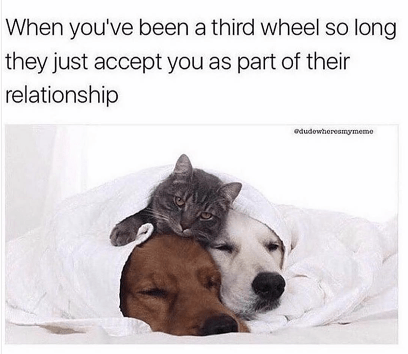 Dog breed - When you've been a third wheel so long they just accept you as part of their relationship edudowheresmymeme