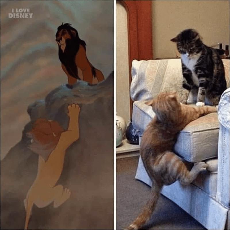 Cat - ILOVE DISNEY