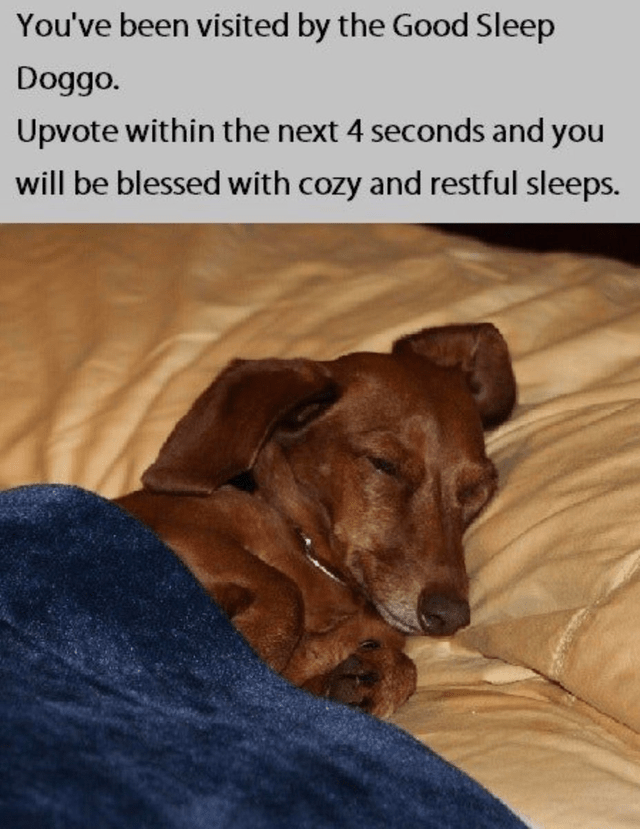 Dog - You've been visited by the Good Sleep Doggo. Upvote within the next 4 seconds and you will be blessed with cozy and restful sleeps.