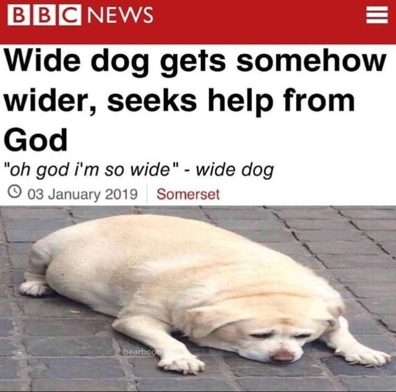 """Fake news headline that reads, """"Wide dog gets somehow wider, seeks help from God"""" above a pic of a stretched-out image of a fat dog"""