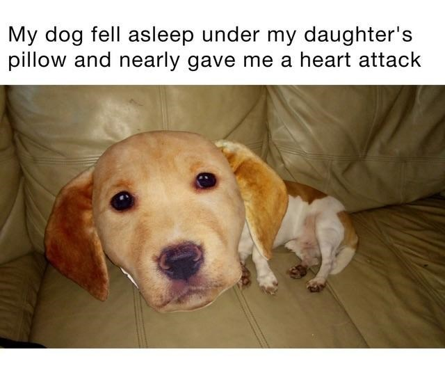skewed perspective - Dog - My dog fell asleep under my daughter's pillow and nearly gave me a heart attack