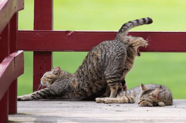 skewed perspective - Cat