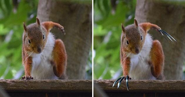 squirrel superhero landing photoshop