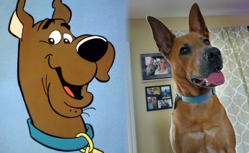 scooby doo dogs look-a-likes
