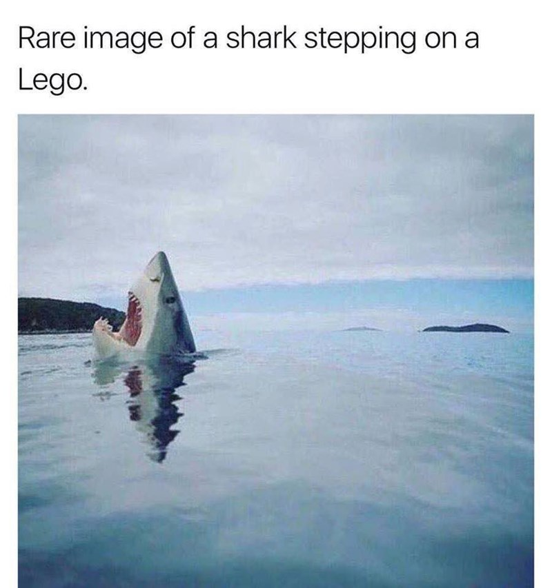 Great white shark - Rare image of a shark stepping on a Lego.