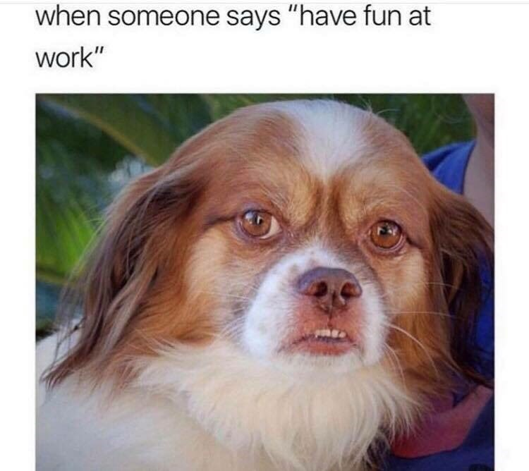 """Dog - when someone says """"have fun at work"""""""