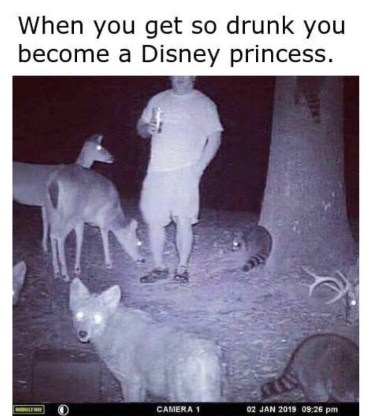 Adaptation - When you get so drunk you become a Disney princess 02 JAN 2019 09:26 pm MORLTE CAMERA 1