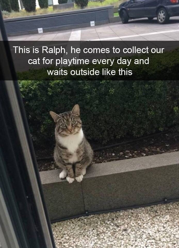 snpachat - Cat - ca This is Ralph, he comes to collect our cat for playtime every day and waits outside like this