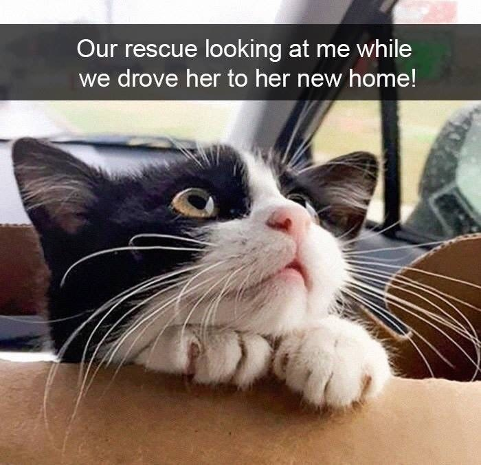snpachat - Cat - Our rescue looking at me while we drove her to her new home!