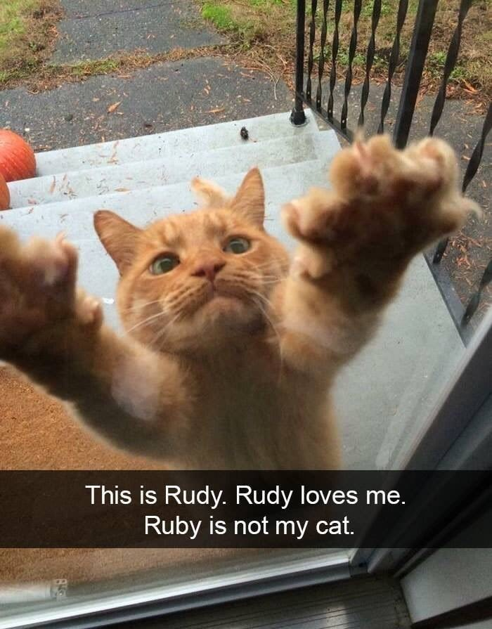 "Snapchat text that reads, ""This is Rudy. Rudy loves me. Rudy is not my cat"" over a pic of an orange cat appearing to reach up to the photographer"