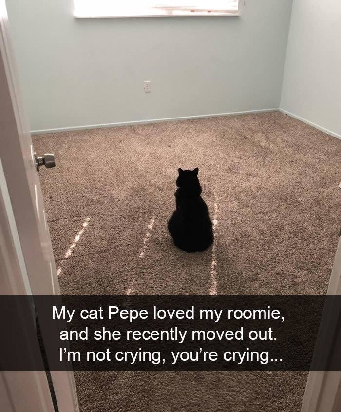 snpachat - Floor - My cat Pepe loved my roomie, and she recently moved out. I'm not crying, you're crying... 1el