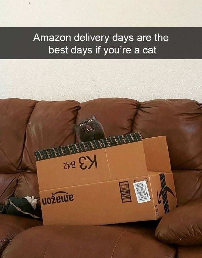 snpachat - Text - Amazon delivery days are the best days if you're a cat K3 B42 enrewe waswwsnds wiswe oaigwe wabmun Noreie ruoteue huokewin