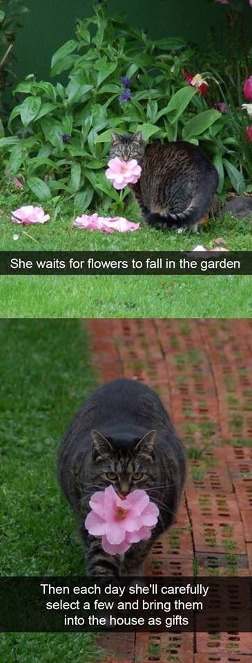 snpachat - Cat - She waits for flowers to fall in the garden Then each day shell carefully select a few and bring them into the house as gifts