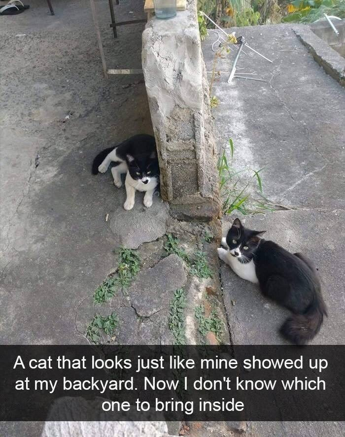 snpachat - Cat - A cat that looks just like mine showed up at my backyard. Now I don't know which one to bring inside