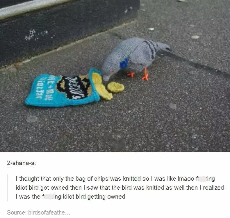 Tumblr post about mistaking a knitted pigeon for a real one