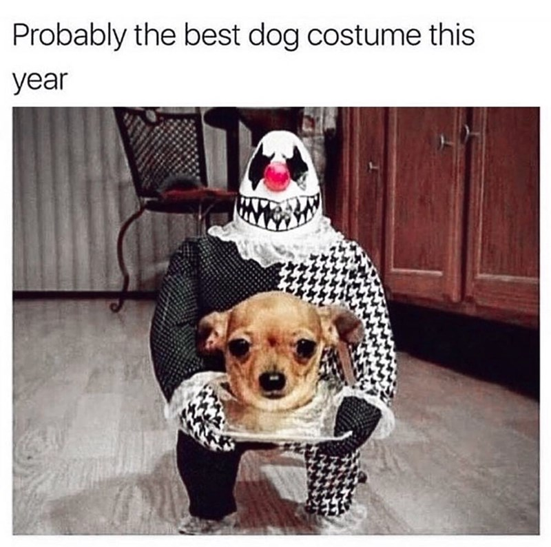 Dog - Probably the best dog costume this year