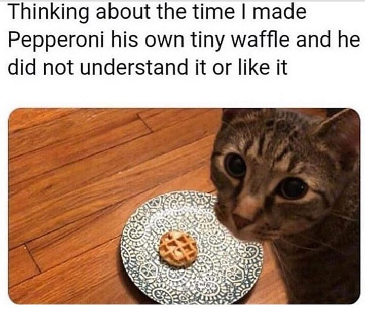 Cat - Thinking about the time I made Pepperoni his own tiny waffle and he did not understand it or like it