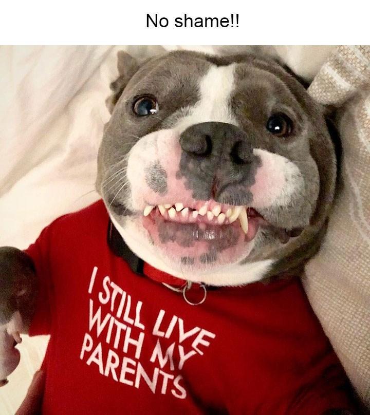 Dog - No shame!! STILL LIVE WITH MY PARENTS