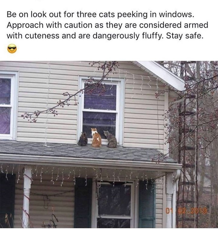 Property - Be on look out for three cats peeking in windows. Approach with caution as they are considered armed with cuteness and are dangerously fluffy. Stay safe. 01 02 2019