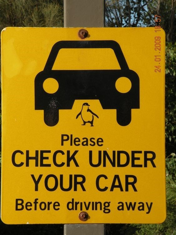 road sign advising to check under car for penguins