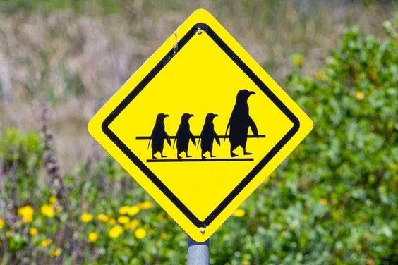 road sign with silhouette of an adult penguin and three penguins chicks