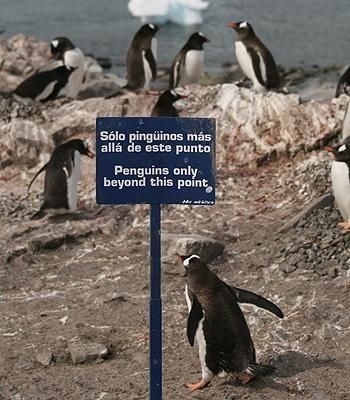 road sign warning from crossing into penguin only area