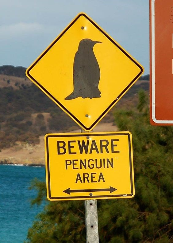 road sign warning from penguin area