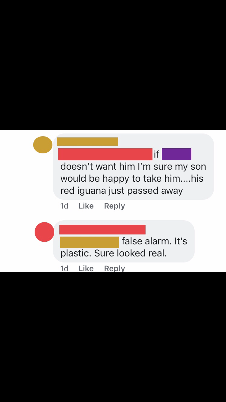Facebook comment revealing the lost iguana is in fact a plastic toy