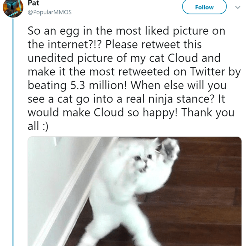Text - Pat Follow @PopularMMOS So an egg in the most liked picture on the internet?!? Please retweet this unedited picture of my cat Cloud and make it the most retweeted on Twitter by beating 5.3 million! When else will you see a cat go into a real ninja stance? It would make Cloud so happy! Thank you all:)