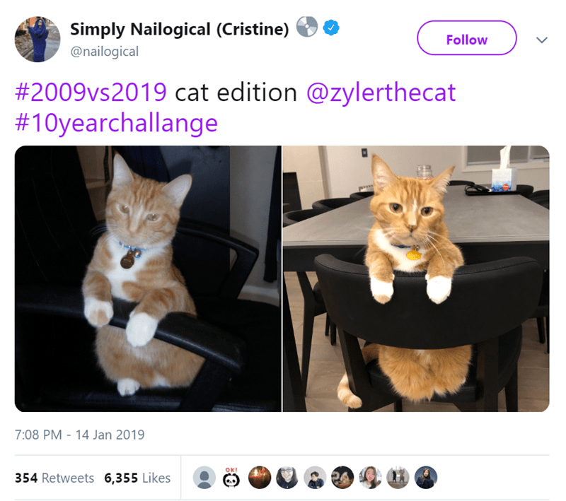 Cat - Simply Nailogical (Cristine) Follow @nailogical #2009vs2019 cat edition @zylerthecat #10yearchallange 7:08 PM 14 Jan 2019 Okt 354 Retweets 6,355 Likes