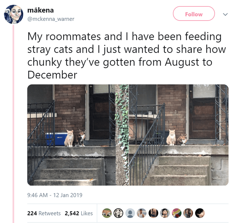 comparison pics of stray cats before and after they were fed regularly