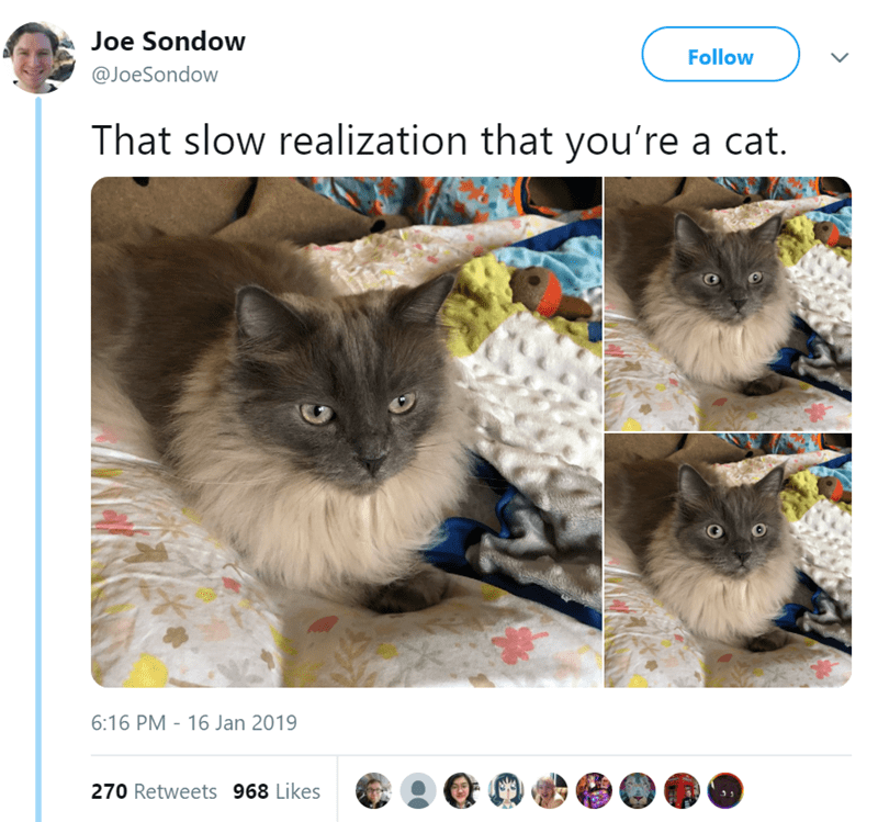 Cat - Joe Sondow Follow @JoeSondow That slow realization that you're a cat. 6:16 PM - 16 Jan 2019 270 Retweets 968 Likes