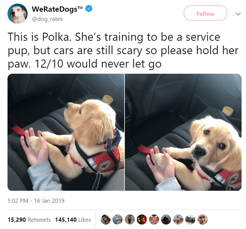 Canidae - WeRateDogsTM Follow @dog_rates This is Polka. She's training to be a service pup, but cars are still scary so please hold her paw. 12/10 would never let go 5:02 PM 16 Jan 2019 15,290 Retweets 145,140 Likes