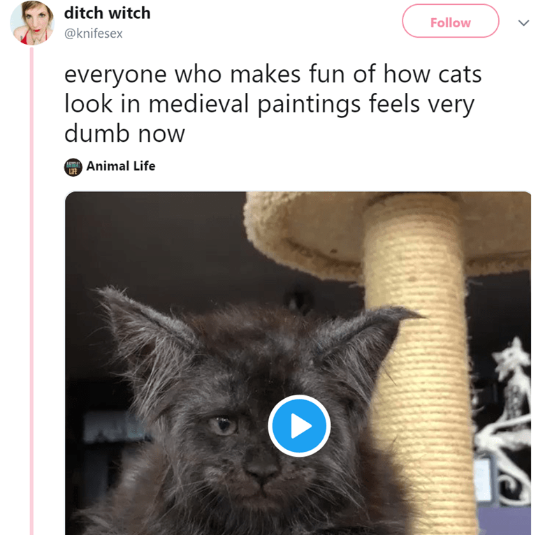 Cat - ditch witch Follow @knifesex everyone who makes fun of how cats look in medieval paintings feels very dumb now ITAnimal Life IFE