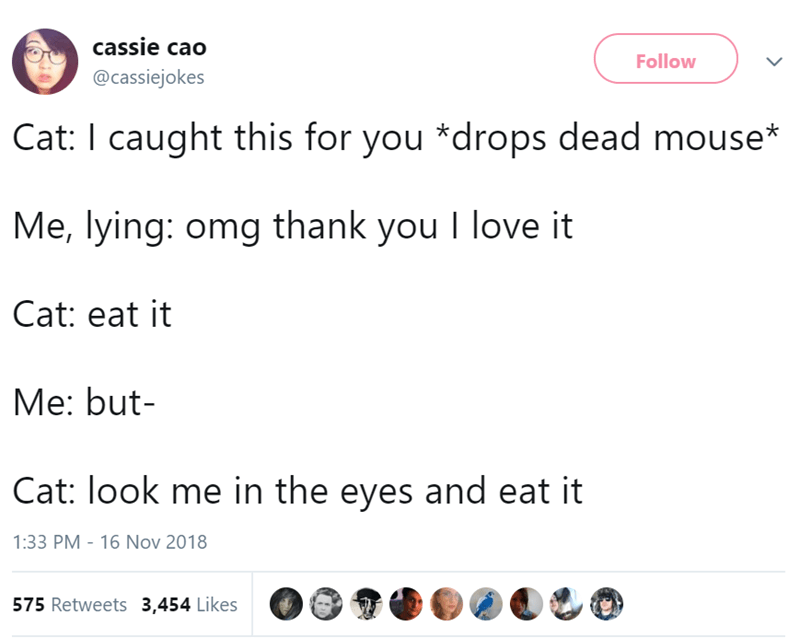 Text - cassie cao Follow @cassiejokes Cat: I caught this for you *drops dead mouse* Me, lying: omg thank you I love it Cat: eat it Me: but Cat: look me in the eyes and eat it 1:33 PM 16 Nov 2018 575 Retweets 3,454 Likes