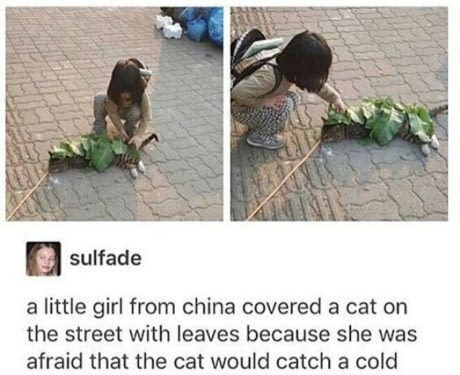 Tumblr post with pics of a little girl covering a cat with leaves