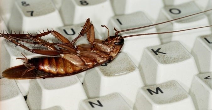 pic of a cockroach laying on it back over a keyboard