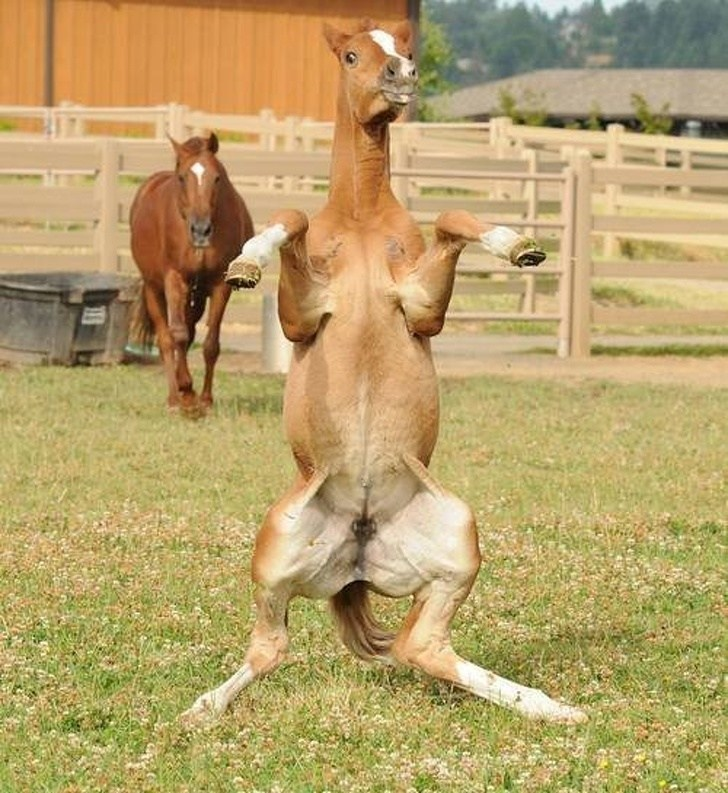 funny pic of horse standing on its hind legs